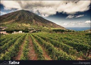 Photogallery Isola di Salina 56