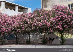 Case Vacanze Salina Santa Marina